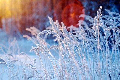 Специалисты Кемеровского центра рассказали об аномалиях прошедшей зимы