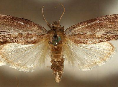 Учёные случайно нашли гусениц, которые могут переваривать полиэтилен