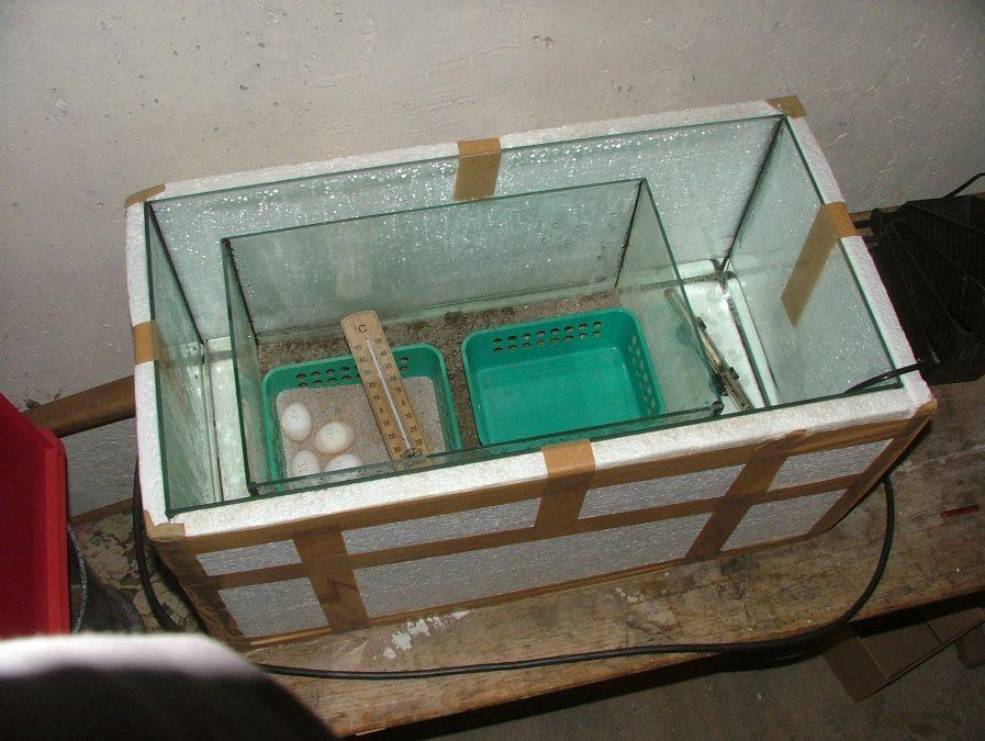 Специалисты Россельхознадзора проверили инкубационные куриные яйца на кислотность желтка