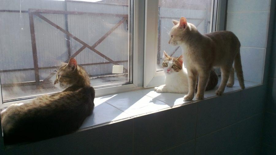 Пожилую кемеровчанку могли выселить из квартиры из-за 15 кошек и двух собак