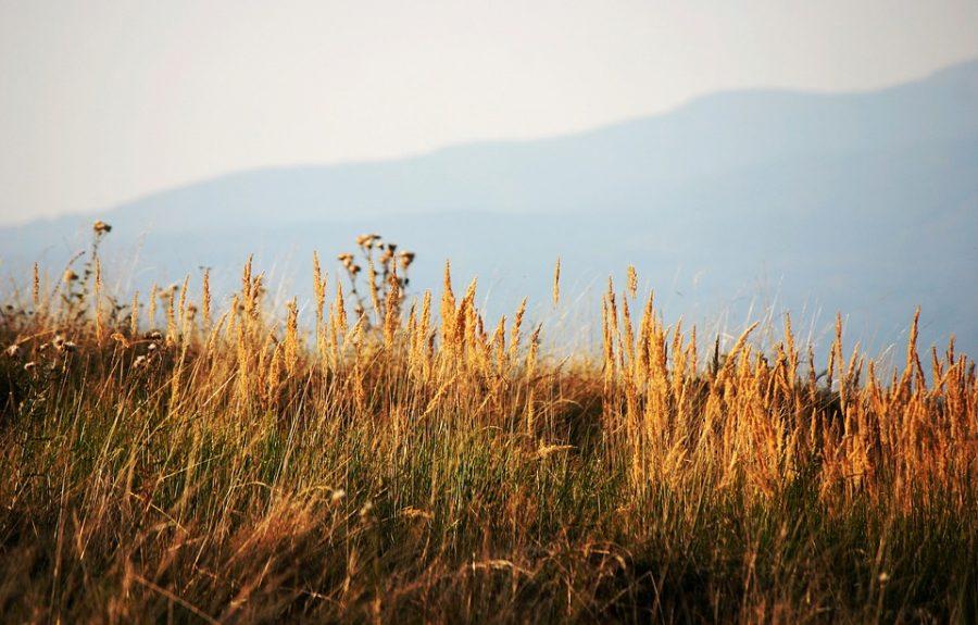 Заподжог травы кузбассовцам грозят штрафы до млн. руб.
