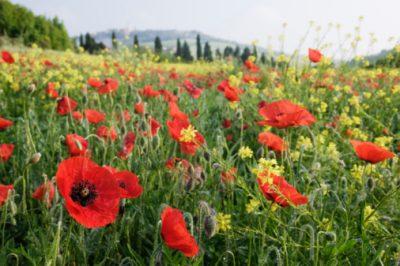 В России планируют легализовать производство наркосодержащих растений