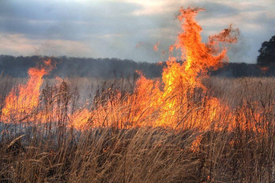 В Сибири ввели режим ЧС из-за пожароопасной обстановки