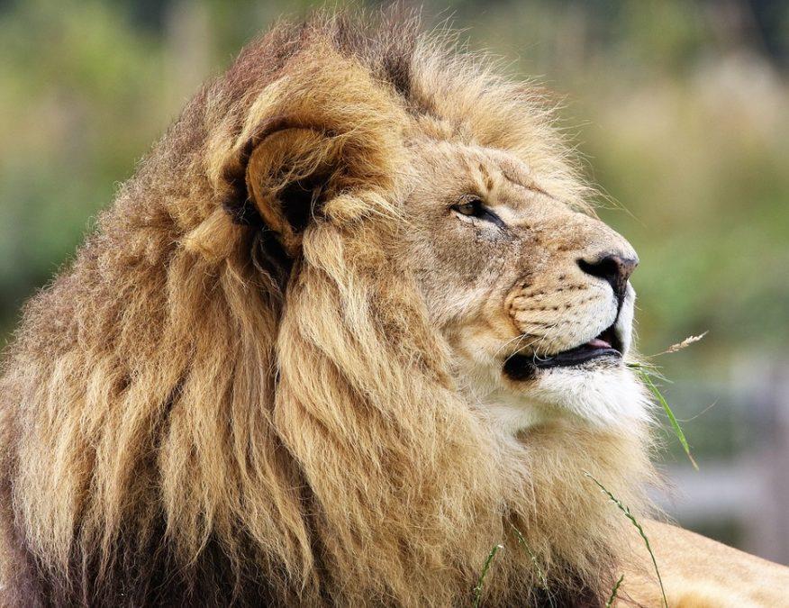 ВоФранции лев набросился надрессировщика вовремя представления