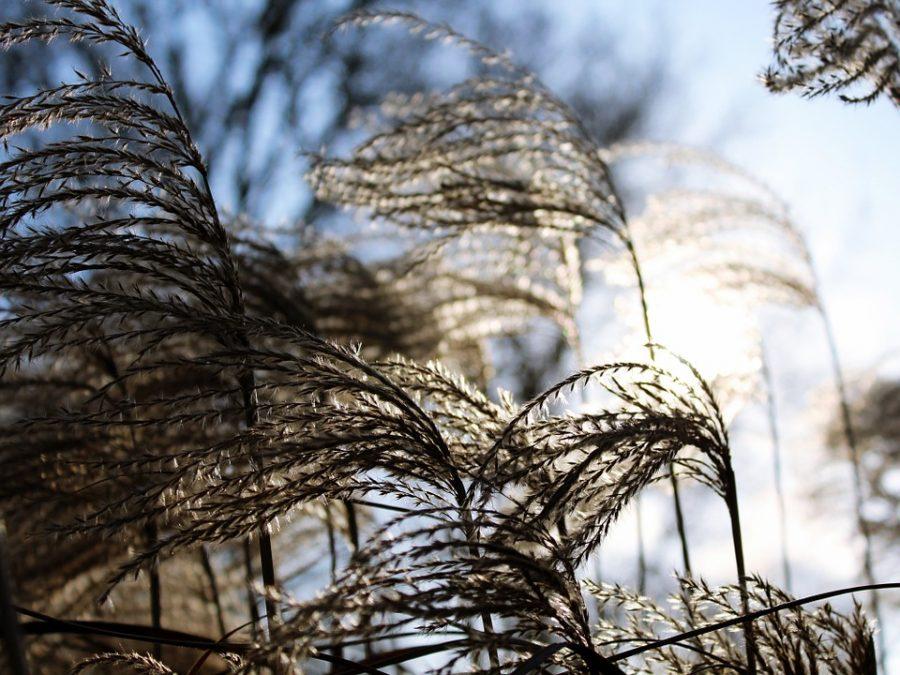 ВКузбассе сохраняются неблагоприятные метеоусловия— МЧС предупреждает