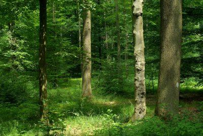 В Кузбассе 16-летний подросток два дня без еды провёл в лесу