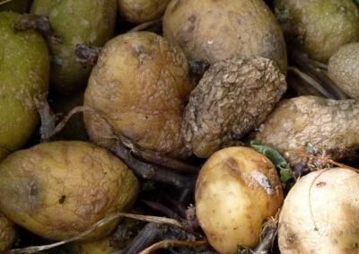 В Кузбассе магазин оштрафовали на 120 тысяч за продажу гнилых овощей