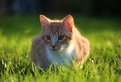 В Нижнем Новгороде открыли вакансию для кота с зарплатой в 20 тысяч рублей