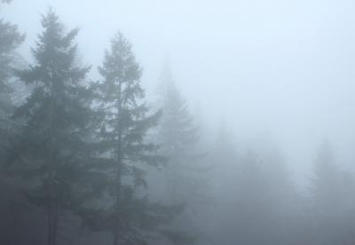 В Новокузнецке из-за тумана не смог приземлиться самолёт