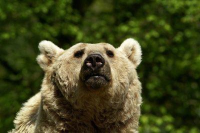 В американском штате Колорадо медведь «угнал» внедорожник