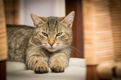 Учёные обвинили в глобальном потеплении собак и кошек