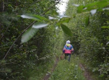 МЧС опубликовало правила поведения для тех, кто заблудился в лесу