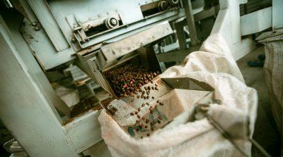 Когда в Кузбассе официально начнётся сбор кедрового ореха