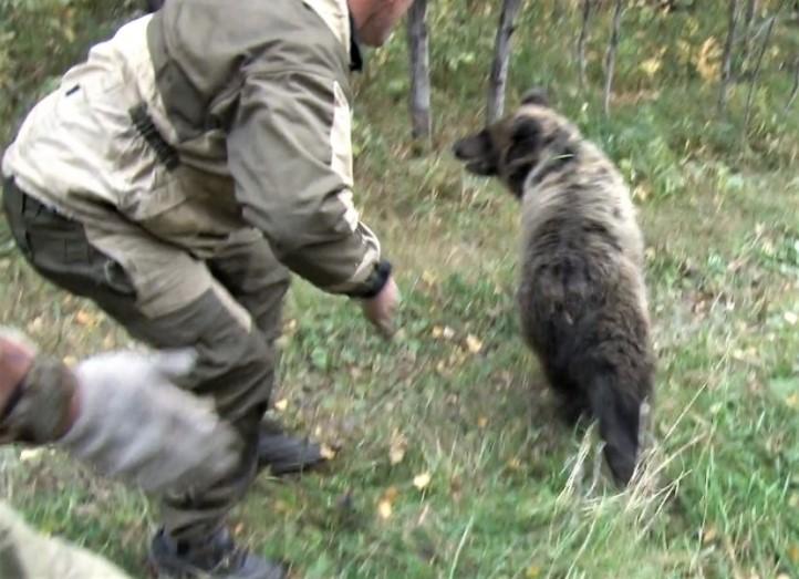 Медвежонок прогулялся погороду вКузбассе