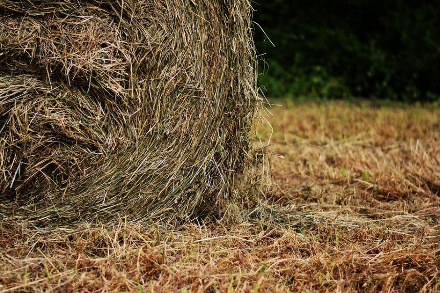 Шутливо перебрасываясь сеном, кузбассовец вилами проткнул брату шею