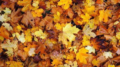 Синоптики рассказали о предварительном прогнозе погоды на октябрь в Кузбассе
