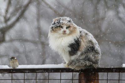 В Кузбасс придёт мокрый снег