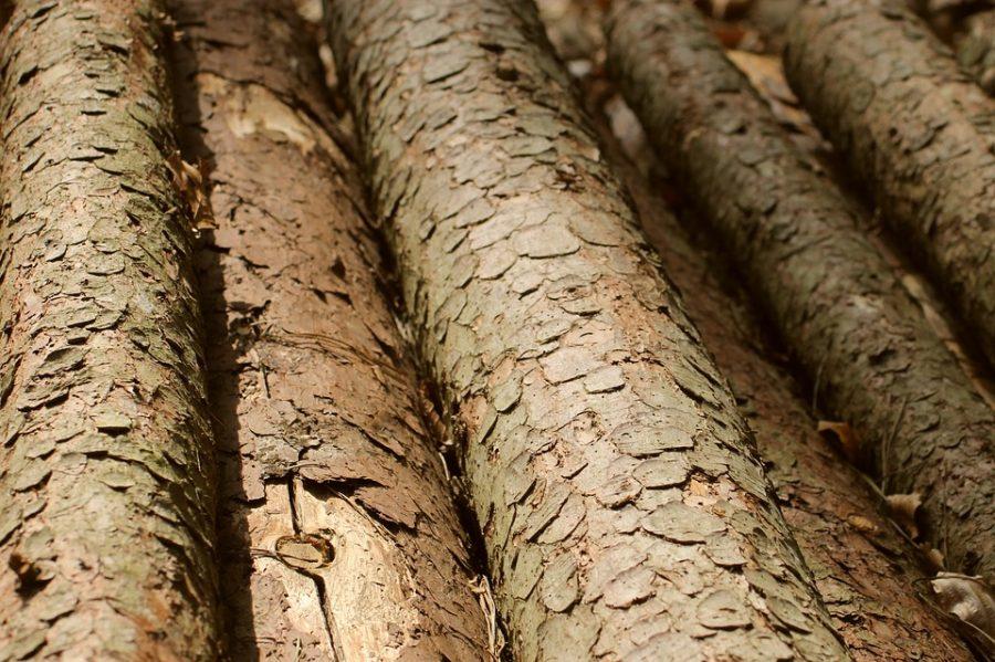 В Кемеровском районе дерево насмерть придавило мужчину