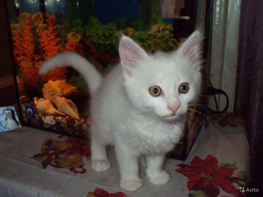 Житель Ростовской области выставил на продажу «волшебного» кота за 2,5 млн рублей