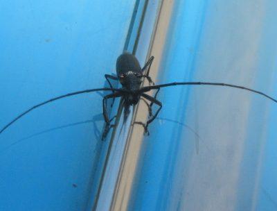 В Чебулинском районе из-за опасного жука в лесничестве ввели карантин