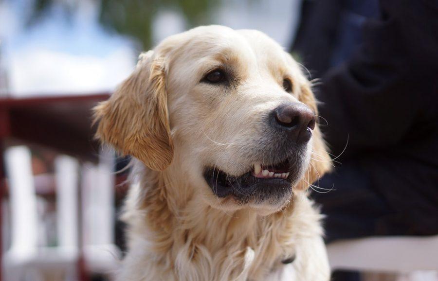 ВКузбассе осудили женщину заубийство собаки