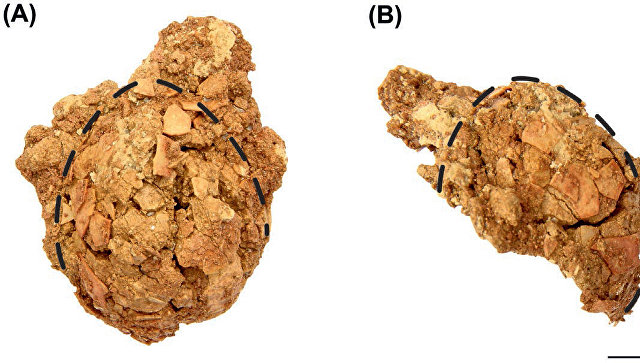 Окаменелое яйцо динозавра обнаружили палеонтологи в Кузбассе