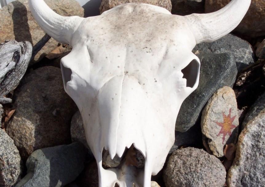 ВКузбассе ликвидировал нелегальный скотомогильник