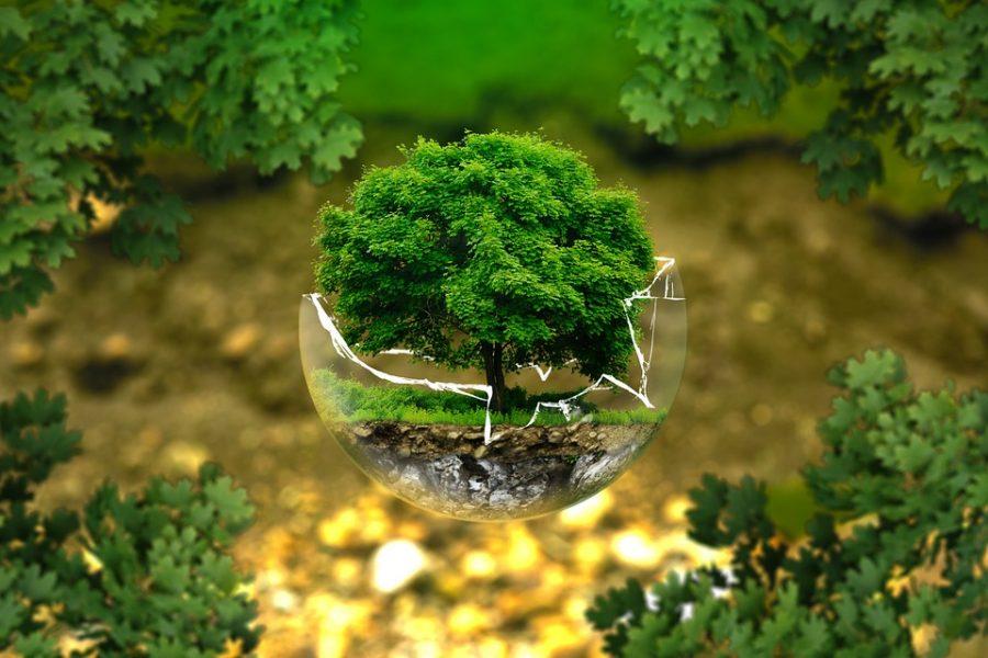 Новокузнецк обогнал Кемерово врейтинге экологического развития