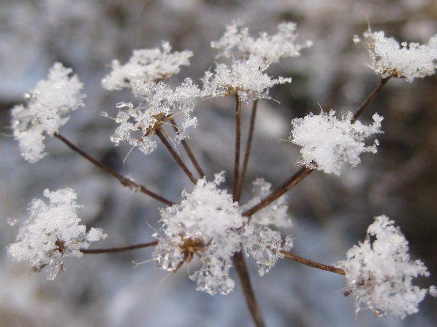 Тёплая погода в Кузбассе сменится морозами до -22°С