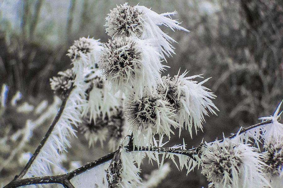 Кузбассовцев предупреждают о резком похолодании на севере области до -34°С