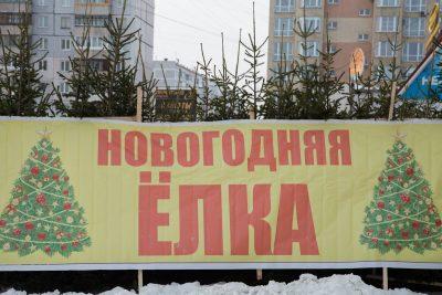 В Кемерове откроют 89 ёлочных базаров