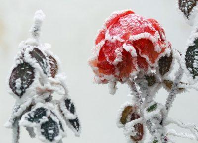 Кузбасс снова «накроют» 30-ти градусные морозы