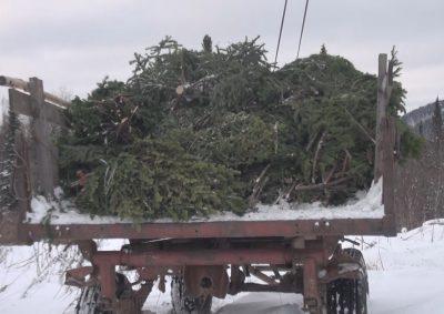 В Кузбассе полиция пресекла незаконную вырубку пихты