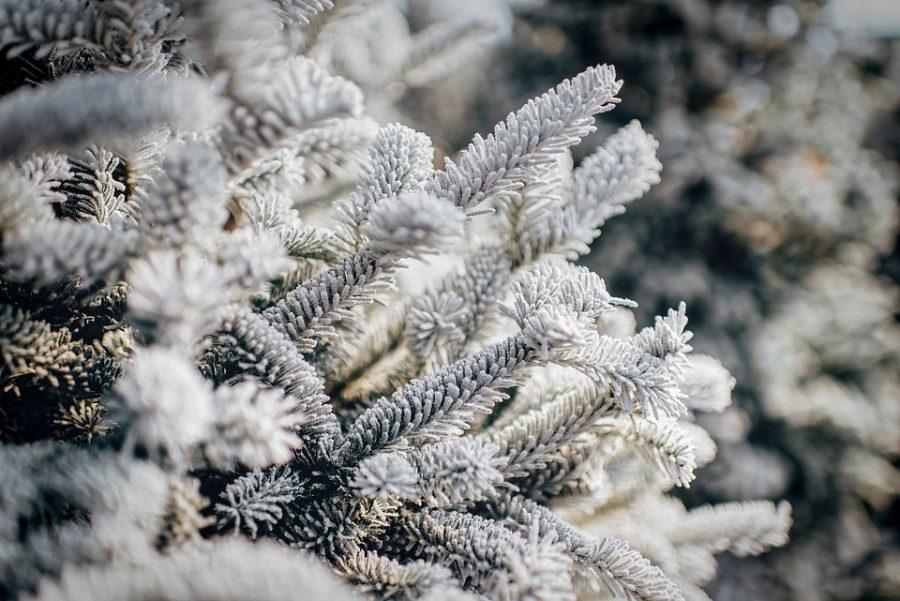 ВКузбассе нановогодние праздники предполагается мороз до43 градусов— Синоптики