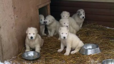 Минобороны поздравило россиян с Новым годом роликом со щенками