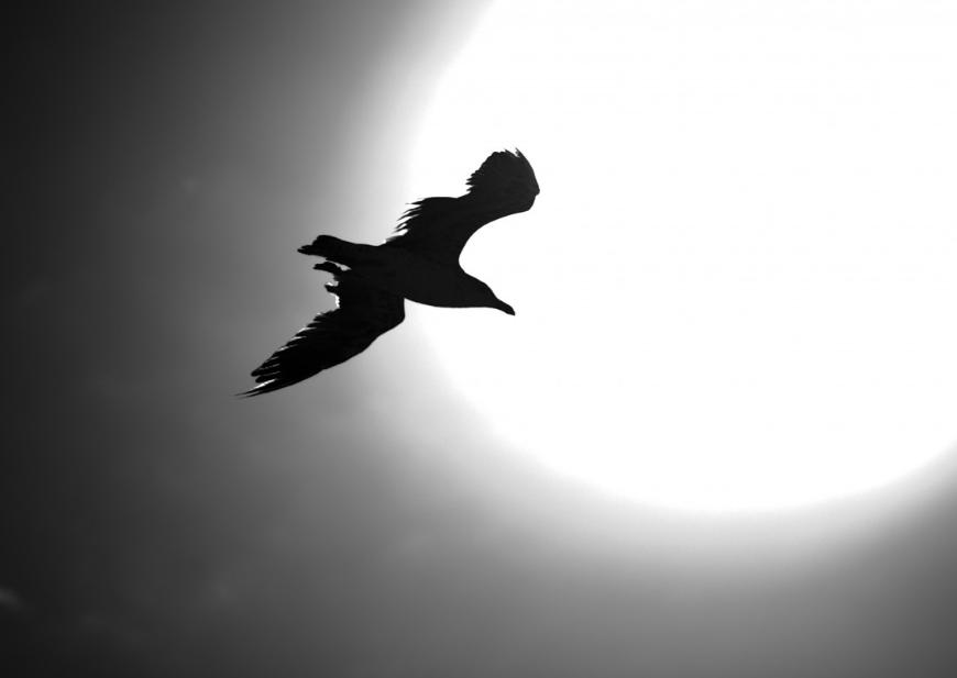 Ученые сообщили, что вАвстралии водятся птицы снанотехнологиями