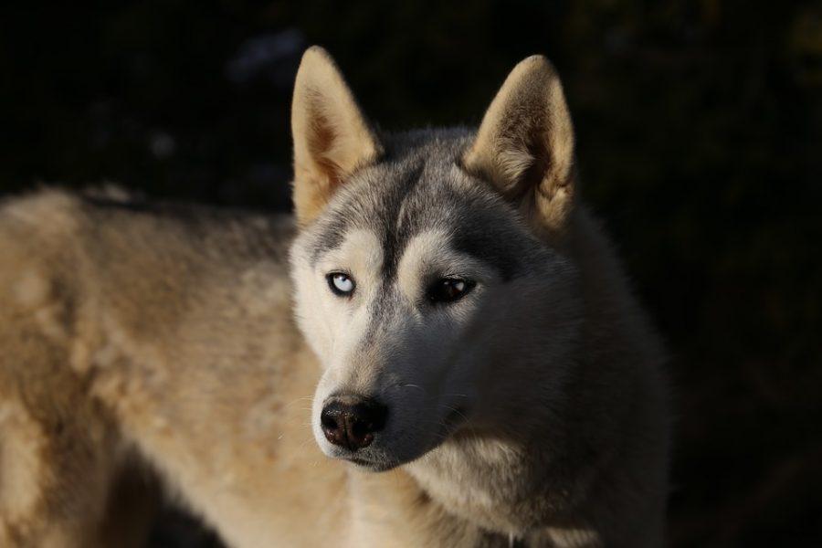 В Саратовской области собака застрелила охотника из двуствольного ружья