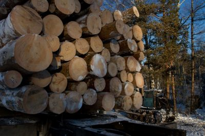 Два «чёрных лесоруба» из Кузбасса заплатят штраф в один миллион рублей