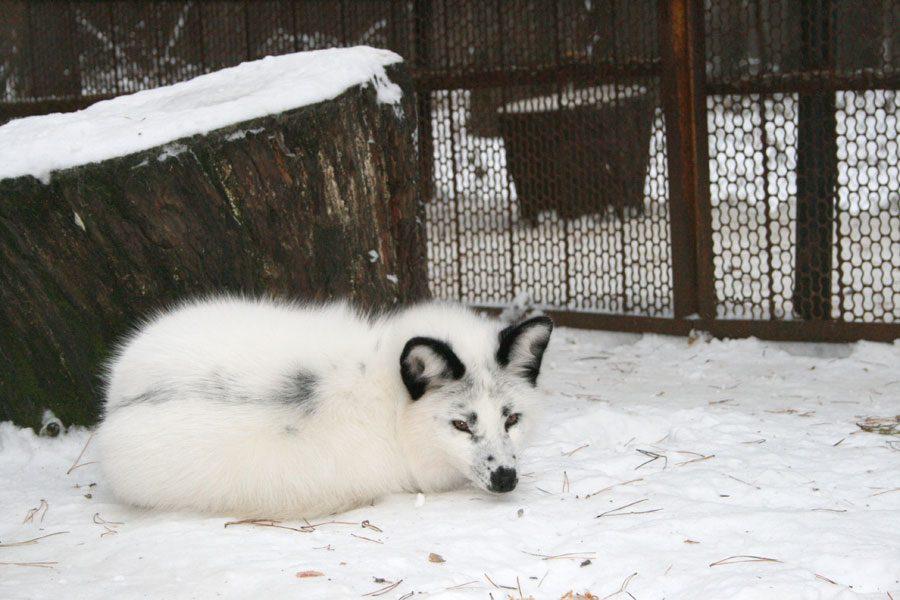 В морозы животных зоопарка «Томской писаницы» перевели на усиленное питание