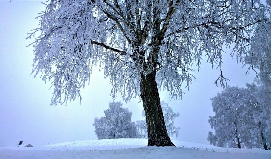 Синоптики рассказали о погоде в начале следующей недели в Кузбассе