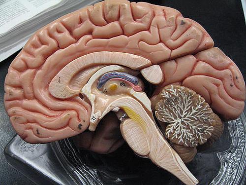 Мозг дает возможность людям избегать переохлаждения при низких температурах— Ученые
