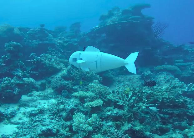 Учёные создали робота-рыбу для изучения морской фауны
