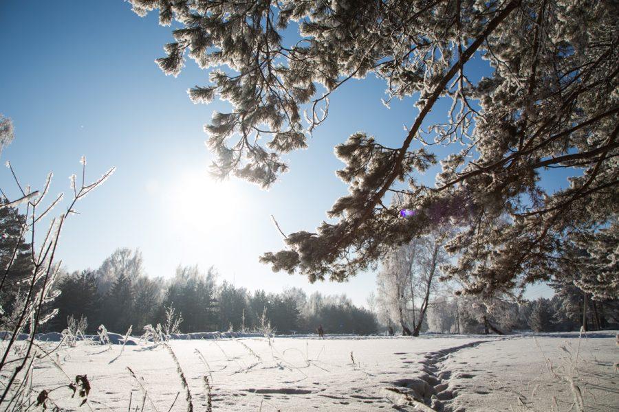 На неделе в Кузбассе потеплеет до +5°С