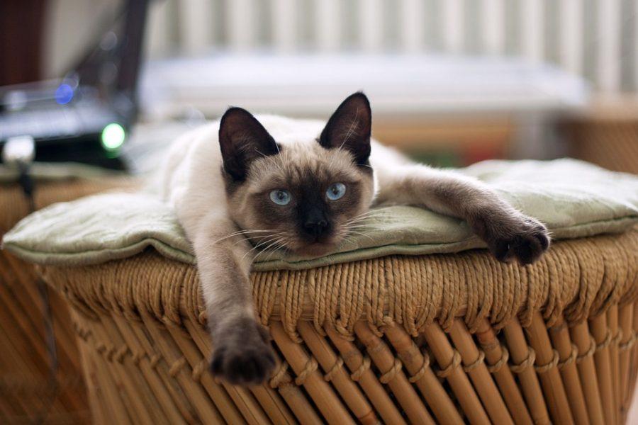 Фото: пользователи Сети меряются длиной котов