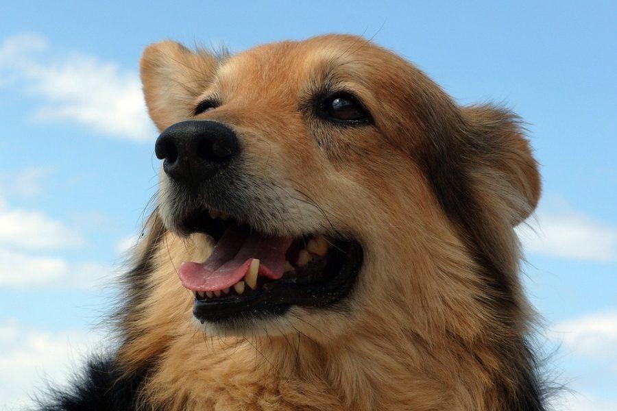 Учёные назвали фактор, который провоцирует развитие аллергии у собак