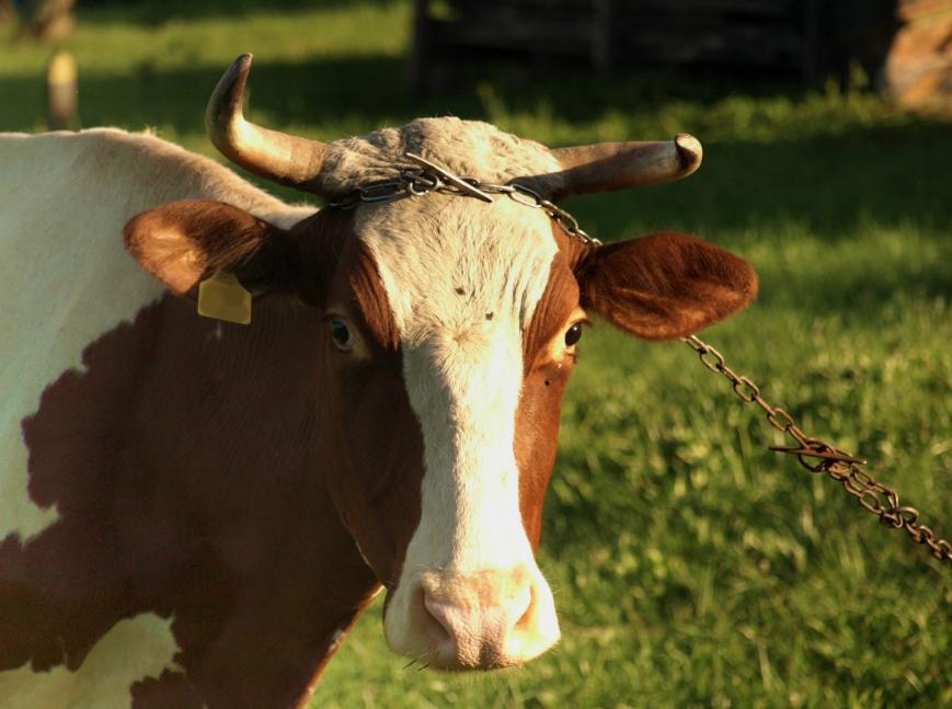 ВКузбассе построят животноводческий комплекс за7 млрд  руб.