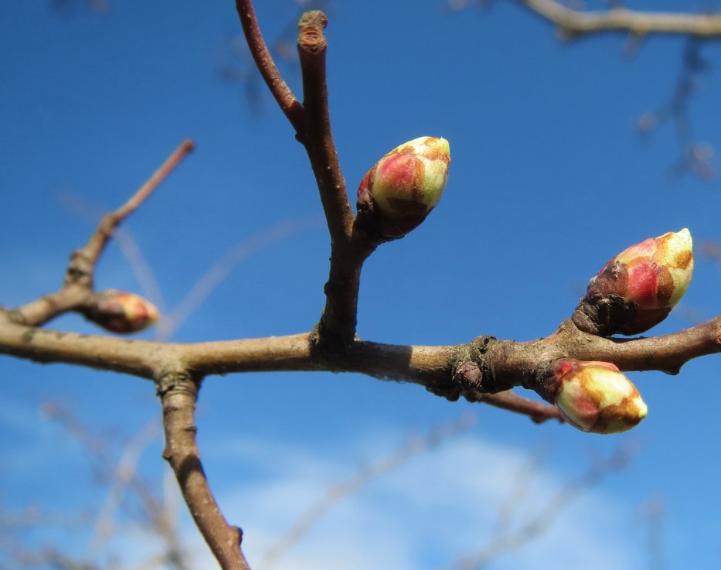 Предварительный прогноз на май в Кузбассе: среднемесячная температура воздуха будет ниже нормы