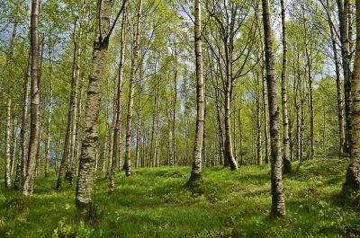 Затраты на искусственное лесовосстановление в Кузбассе выросли почти на 10 млн рублей