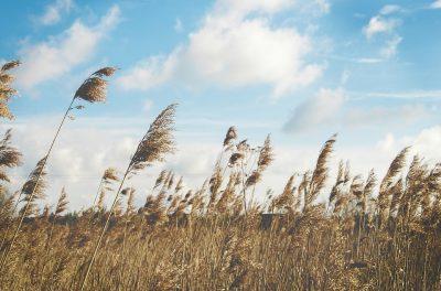 Кузбассовцев предупреждают об усилении ветра и грозах