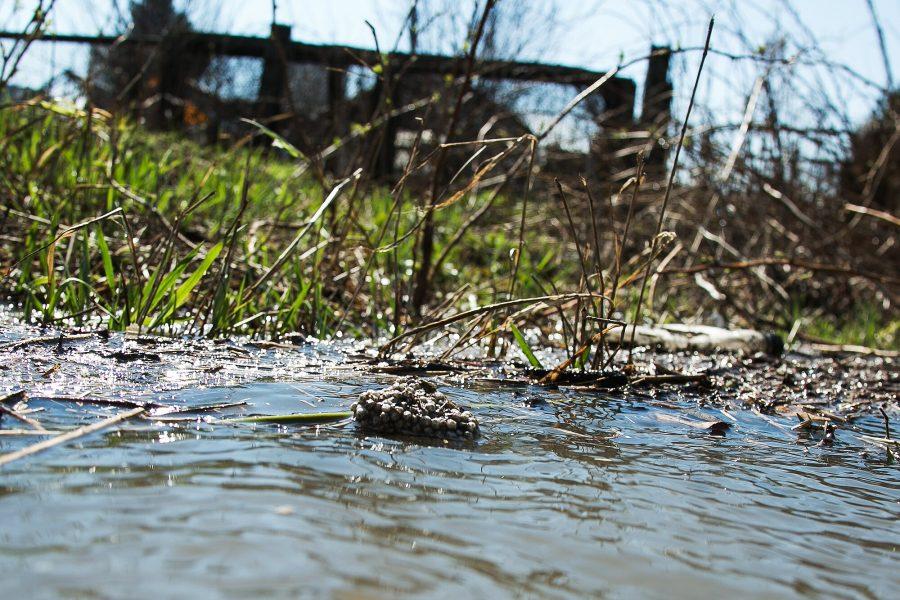 В Томи в Новокузнецке обнаружили тело рыбака